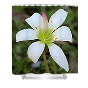 Soft Pastel Bloom Shower Curtain
