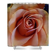 Soft Peach Rose Shower Curtain