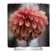 Soft Pedals  Shower Curtain