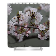 Soft Pink Blossoms Shower Curtain
