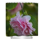 Soft Pink Camellia Shower Curtain