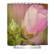 Soft Pink Flower Shower Curtain