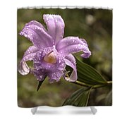 Soft Pink One-day Orchid With Droplets Of Dew Shower Curtain