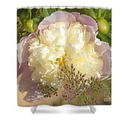 Soft Pink Peony Photography Shower Curtain