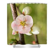 Pink Quince Blossom Shower Curtain