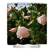 Soft Pink Rose Of Sharon Shower Curtain