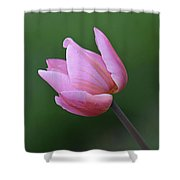 Soft Pink Tulip Shower Curtain