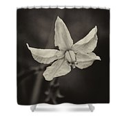Soft Sepia Bloom Shower Curtain
