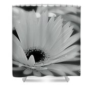 Soft Spring Shower Curtain