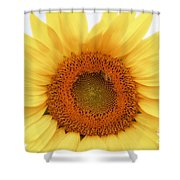 Soft Sunflower Shower Curtain