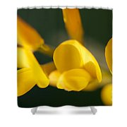 Soft Sweet Broom Shower Curtain
