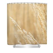 Soft Touch Shower Curtain