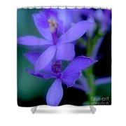 Soft Violet Shower Curtain