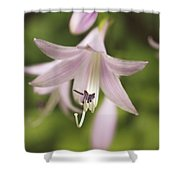 Softened Hosta Bloom Nature Photograph  Shower Curtain
