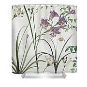 Softly Purple Crocus Shower Curtain