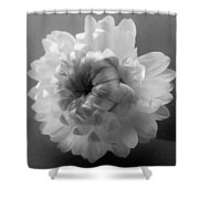 Softly Romantic Shower Curtain