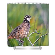 Softly Whisper My Name...it's Bob Shower Curtain