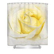 Softly Yellow Rose Shower Curtain