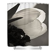 Lit Tulip Shower Curtain