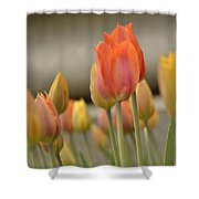 Softness Of Spring Shower Curtain