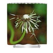 Soggy Dandelion Shower Curtain