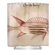 Soldier-fish, 1585 Shower Curtain