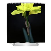 Solitaire Yellow Daffodil Shower Curtain