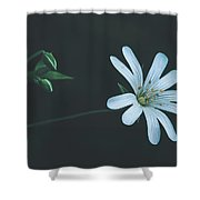 Solitary Beauty Shower Curtain