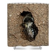 Solitary Bee  Andrena Cinearia Shower Curtain