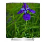 Solitary Blue Flag Shower Curtain