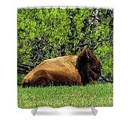 Solitary Buffalo Shower Curtain