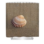 Solitary Cockle Shell Shower Curtain