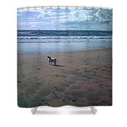 Solitary Doglooking To America Shower Curtain
