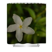 Solitary Flower Shower Curtain