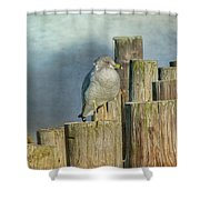Solitary Gull Shower Curtain