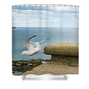 Solitary Seagull Take-off Shower Curtain