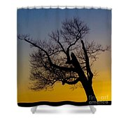 Solitary Tree At Sunset Shower Curtain