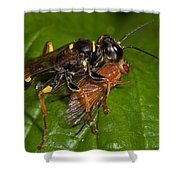 Solitary Wasp Shower Curtain