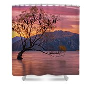 Solitary Willow Tree Shower Curtain