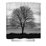 Solitude 3, New Castle Sunrise Shower Curtain