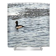 Solo Duck Shower Curtain
