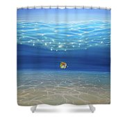 Solo Under The Turquoise Sea Shower Curtain