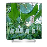 Solomans Seal In Spring Shower Curtain