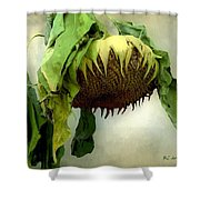 Sombre November  Shower Curtain