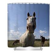 Some Horses Roam In Burwell, Ne Shower Curtain