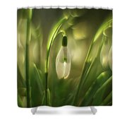 Some Snowdrops Shower Curtain