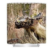 Something About A Dragon. Shower Curtain