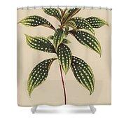 Sonerila Margaritacea Shower Curtain