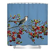 Song Of The Mockingbird Shower Curtain