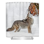 Song Of The Wild Shower Curtain